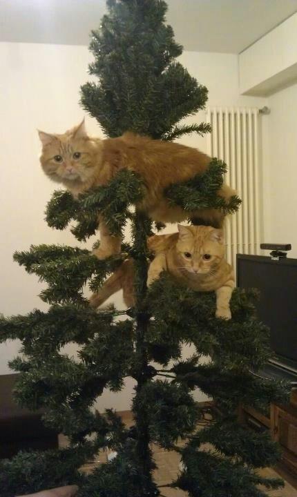 Humor me cats and christmas for Funny christmas decorations