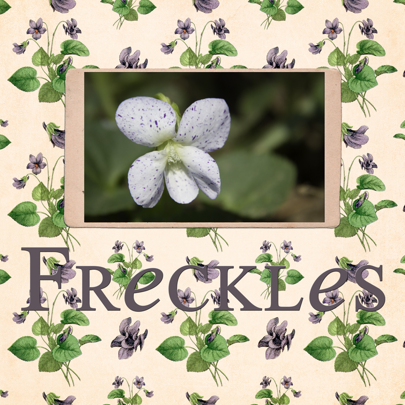 Freckles Scrapbook page by Teresa Mucha on threelittlekittens.com/blog