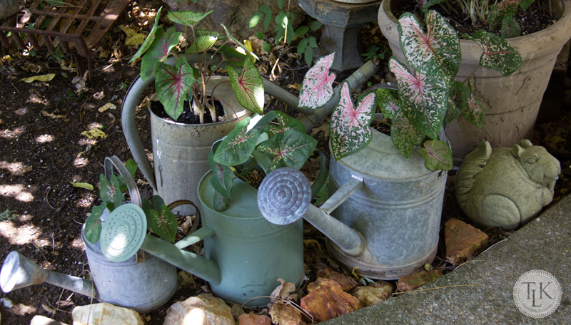 Vintage Watering Can Planters filled with Colorful Caladiums on threelittlekittens.com/blog
