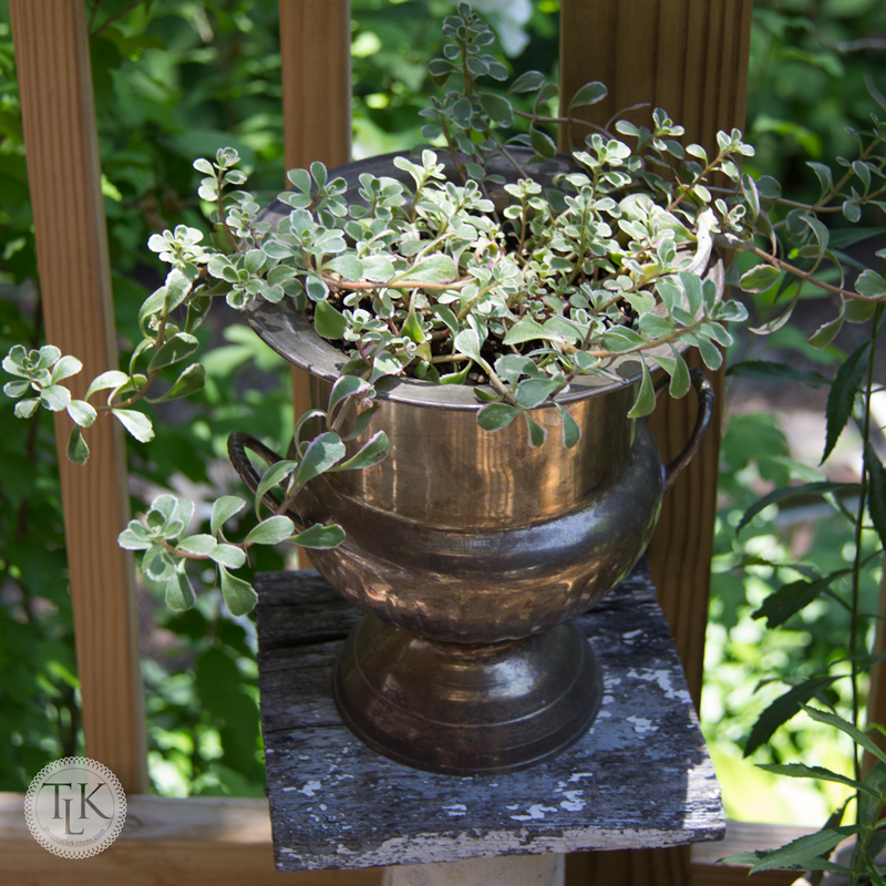 Succulents in a Silverplate Urn Planter on threelittlekittens.com/blog