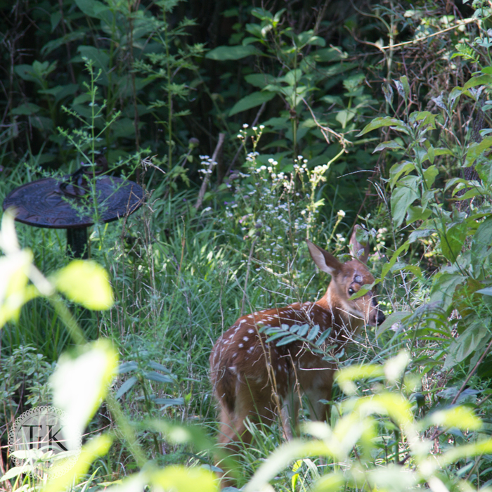 Cute fawn in our garden