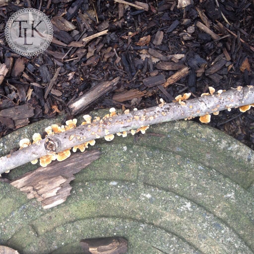 Lichen Covered Twig