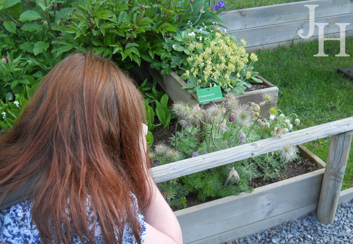 Here I am taking pictures of the seed heads on the anemones