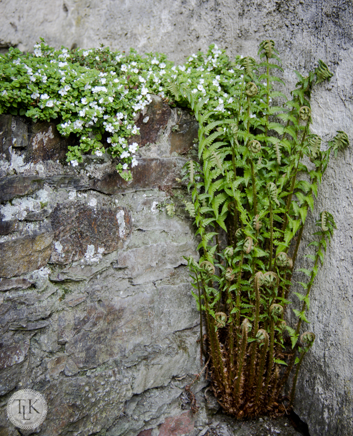 Ferns-and-Flowers