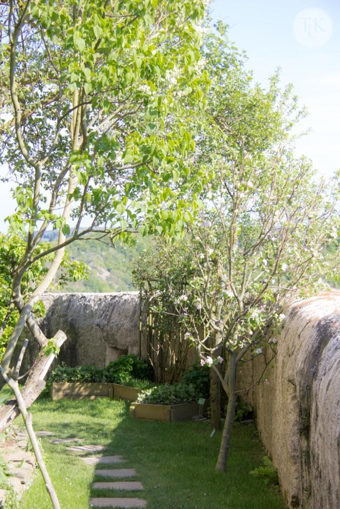 Fruit-Trees-at-Marksburg-Castle
