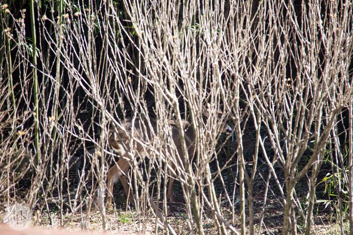 Deer hiding in the garden