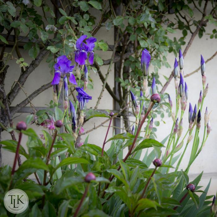 Marksburg-Castle-Herb-Garden-03
