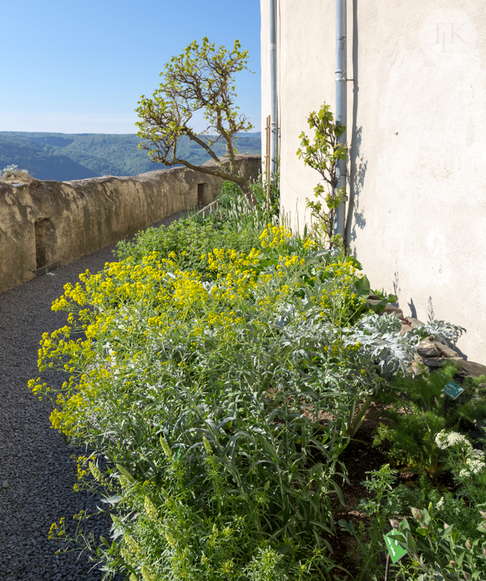Marksburg-Castle-Herb-Garden-04