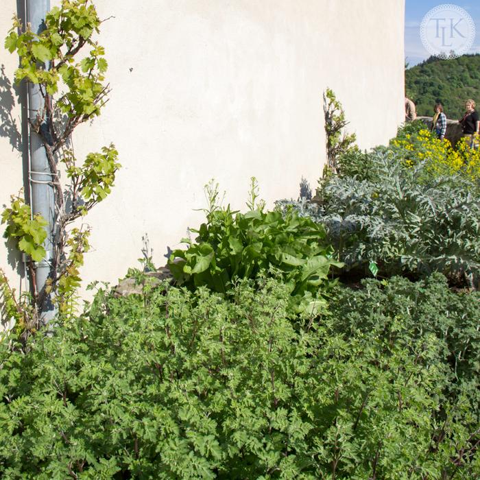 Marksburg-Castle-Herb-Garden-05