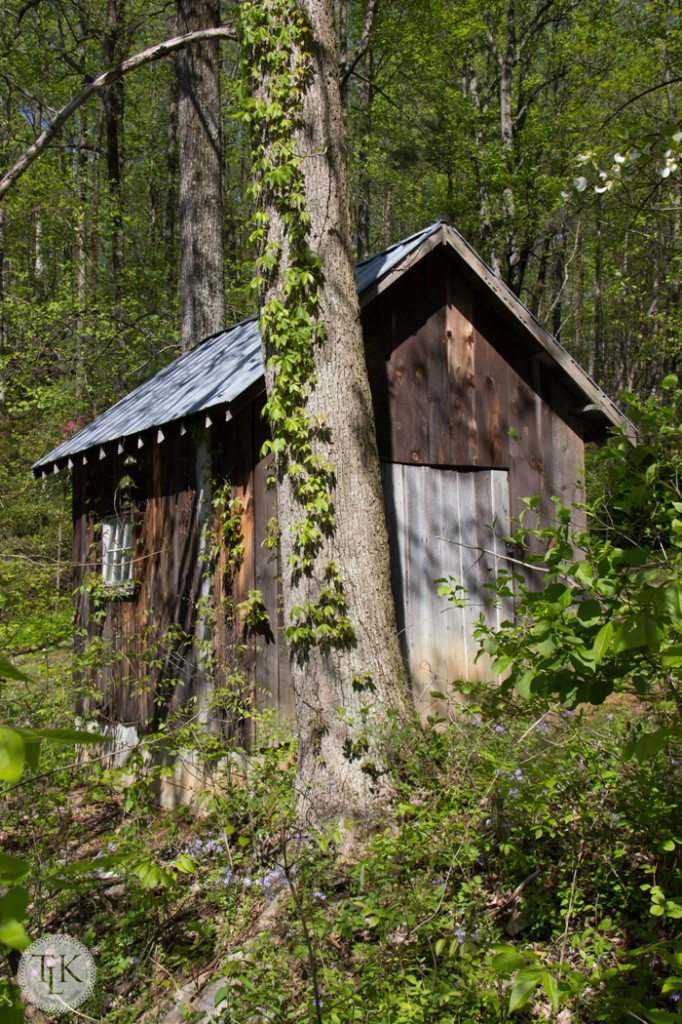 Happy-Hollow-Shed
