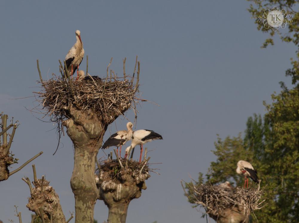 THREE LITTLE KITTENS BLOG | Strasbourg White Storks
