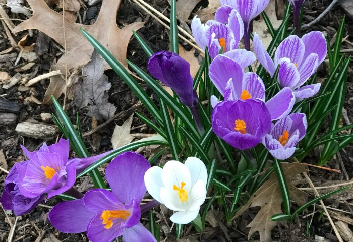 Sunday Bliss – March 4th